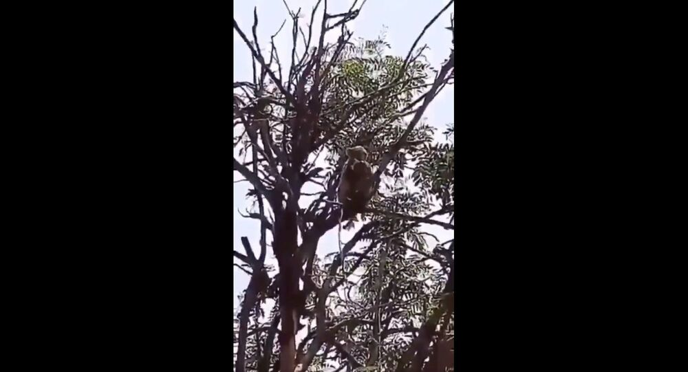 A monkey in India's Meerut intervened a lab technician carrying blood samples of Covid-19 patients and snatched the packets from him