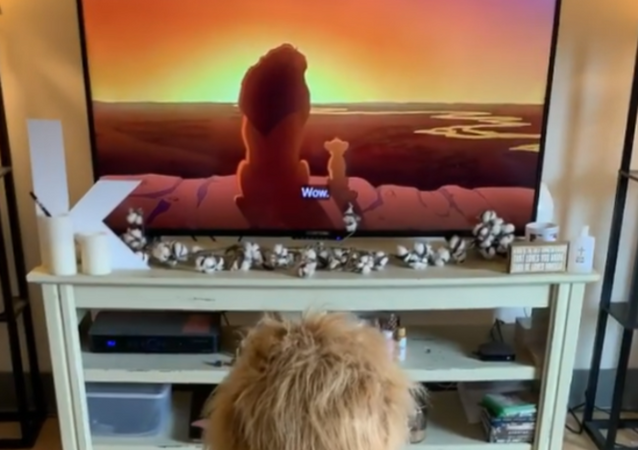 Simba, Is That You? Golden Retriever Loves 'Lion King' Movie