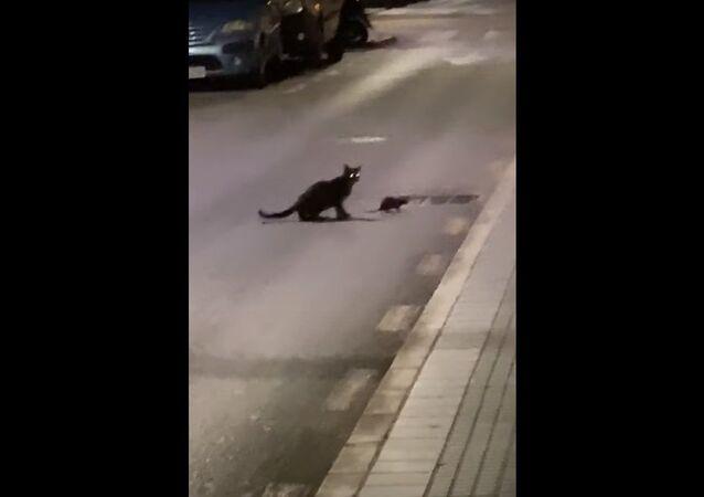 Cat vs Ninja Rat