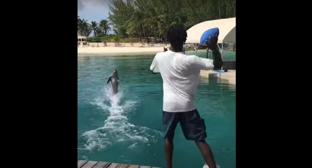 Dolphin Catches Football Pass Perfectly in the Bahamas