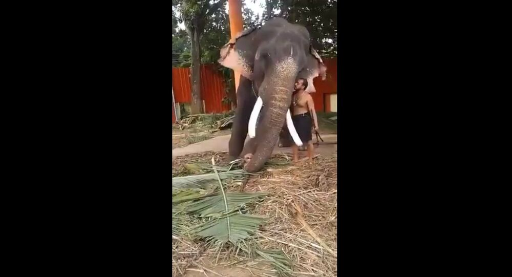 A Mahout at a Temple in Kerala asks his Elephant permission to go home
