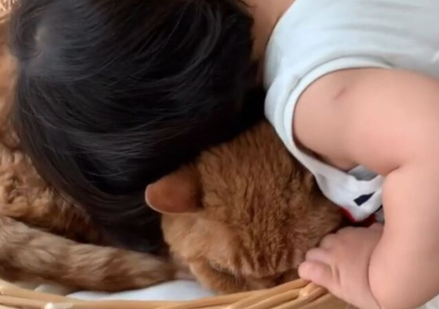 Sweet Toddler Loves Pet Cat