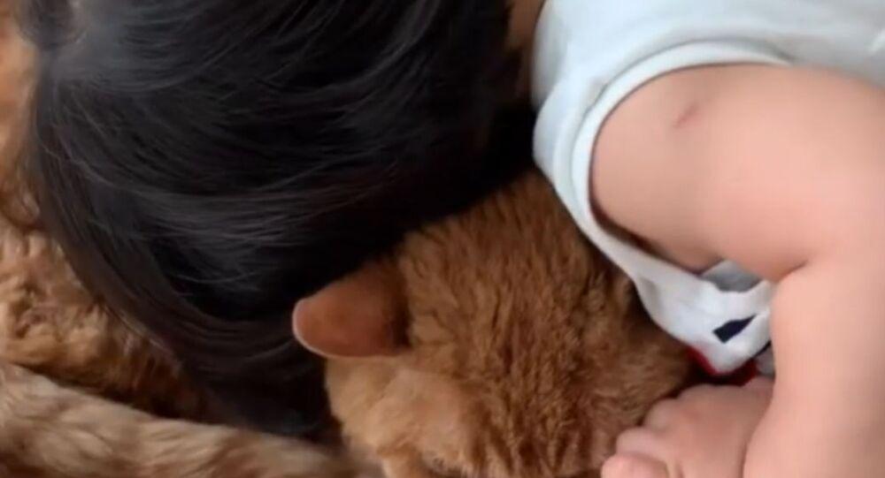 Sweet Toddler Loves Pet Cat
