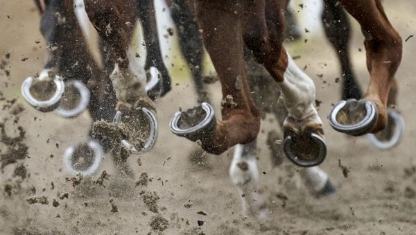 Horses' hooves during the Chelmsford City Racecourse in Chelmsford, England, 8 June 2020 - Sputnik International