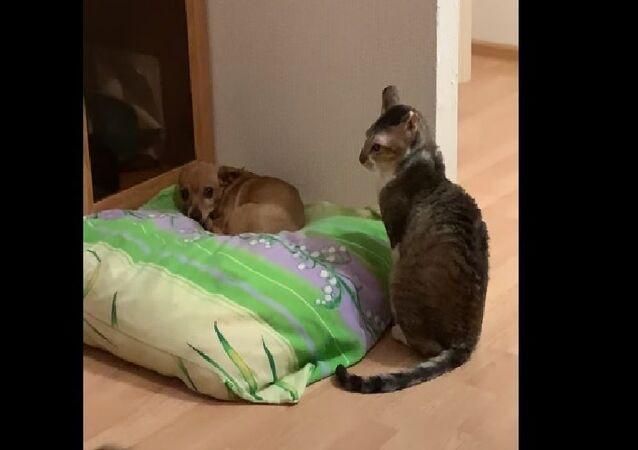 Dof and Cat