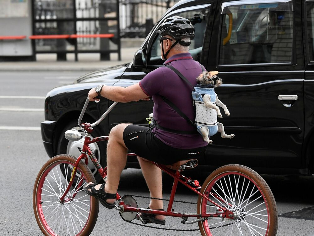 A man is seen cycling in London with a dog on his back, 9 June 2020.