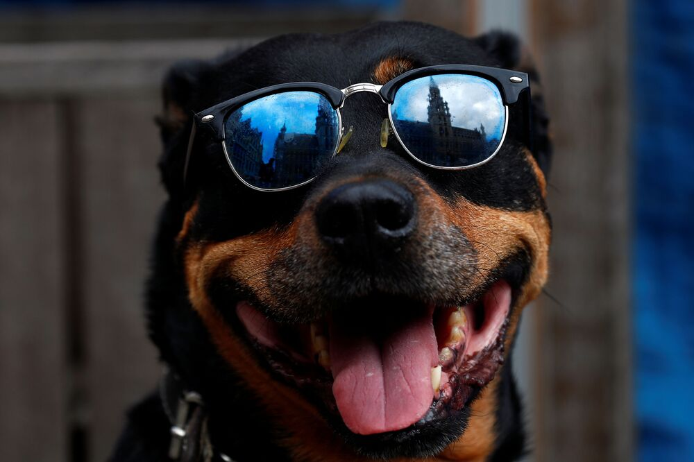 A dog looks through sunglasses at Brussels Grand Place square as restaurants and bars reopen after weeks of lockdown restrictions following the coronavirus disease (COVID-19) outbreak, in Brussels, Belgium, 8 June 2020.
