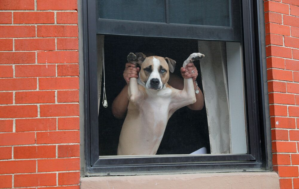 A dog and its owner watch from a window as demonstrators march past during a George Floyd protest in Boston, Massachusetts, US, 7 June 2020.