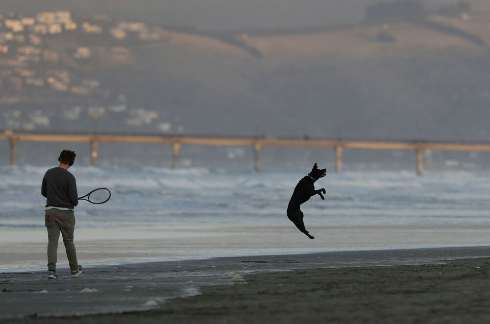 A dog leaps to catch a ball at New Brighton Beach in Christchurch, New Zealand, Tuesday, 9 June 2020. New Zealanders enjoyed their first day at alert level 1 after Prime Minister Jacinda Ardern announced on 8 June that the Cabinet had agreed to remove almost all remaining coronavirus restrictions from midnight, with the exception of the closed borders.