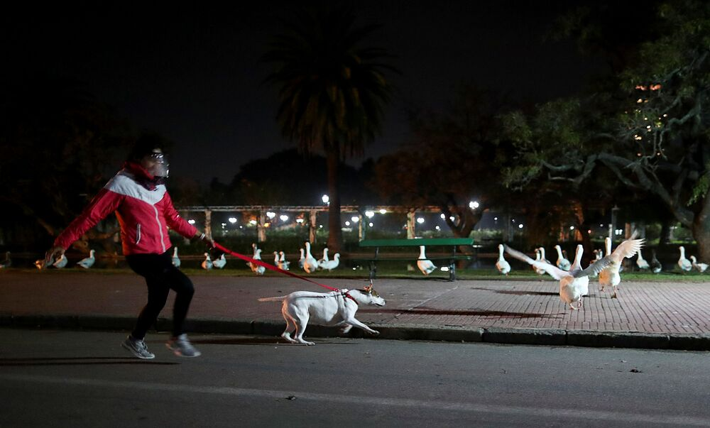 A woman wearing a protective face shield jogs at a park as her dog runs towards a goose, as the city of Buenos Aires eases their lockdown restrictions, during the spread of the coronavirus disease (COVID-19), in Buenos Aires, Argentina, 8 June 2020.
