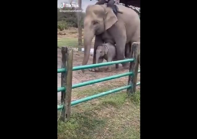 Here baby elephant with Z+ security