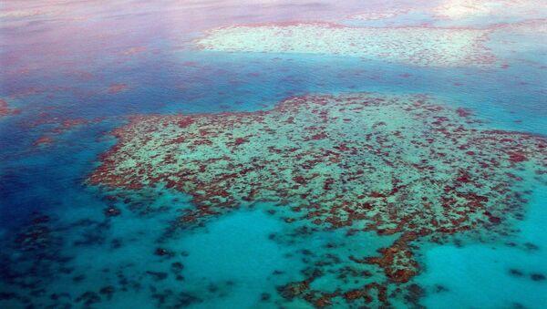 Great Barrier Reef in Australia - Sputnik International