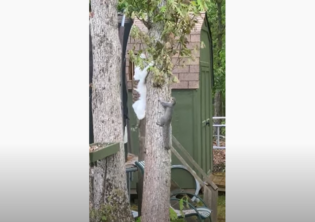 Cat, Squirrel Duo Wind Up Deadlocked in Tree