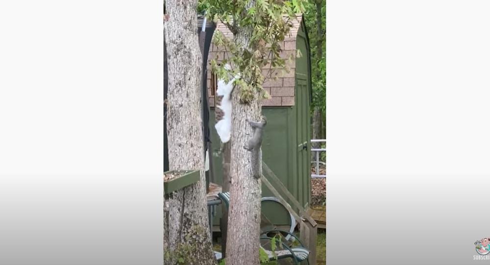 Cat, Squirrel Duo Wind Up Deadlocked in Tree