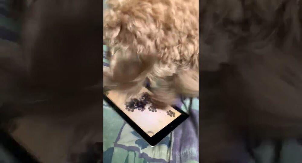 Dog Loves Gaming on Tablet