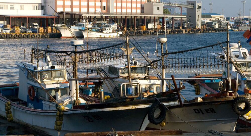 Squid Boats in the Harbour