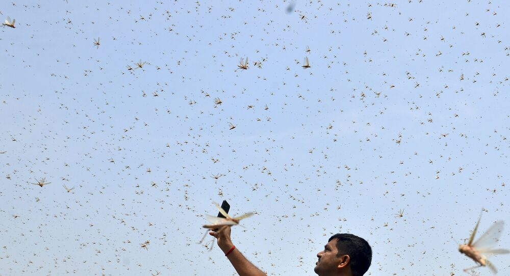 A man takes pictures of swarms of locusts in a residential area of Allahabad on 11 June 2020.