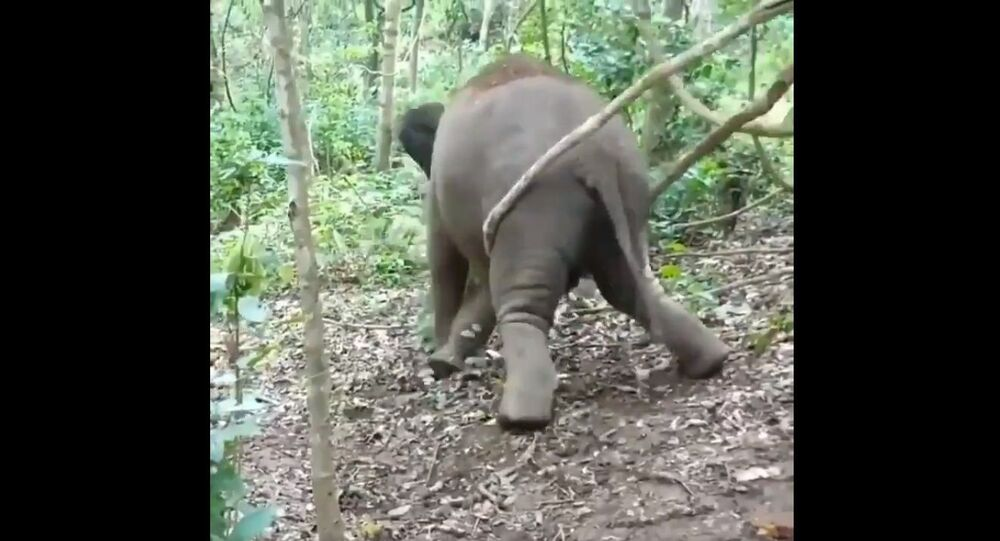 This little calf is all excited about swinging