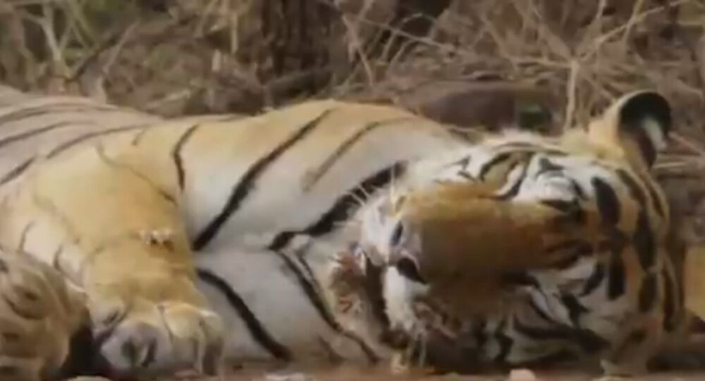 A quick brown frog jumped into a lazy tiger