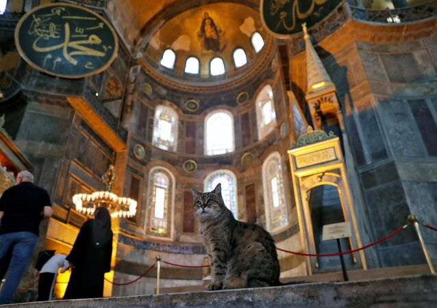 Gli the cat of Hagia Sophia or Ayasofya, a UNESCO World Heritage Site which was a Byzantine cathedral before it was converted into a mosque and currently a museum, is pictured in Istanbul, Turkey, July 2, 2020.