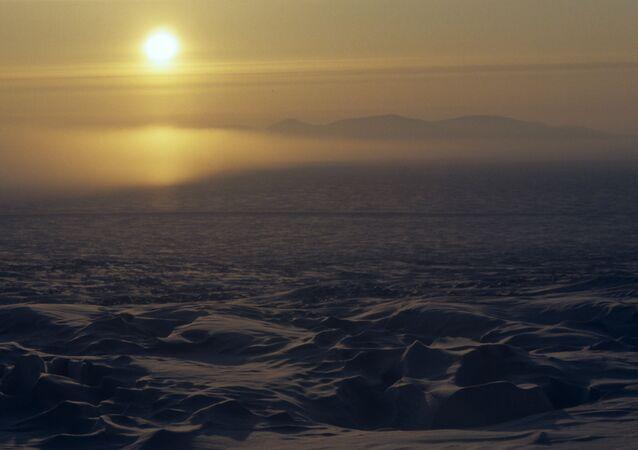 Arctic flora and fauna
