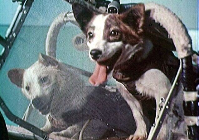 Belka and Strelka trained for spaceflight for almost a year