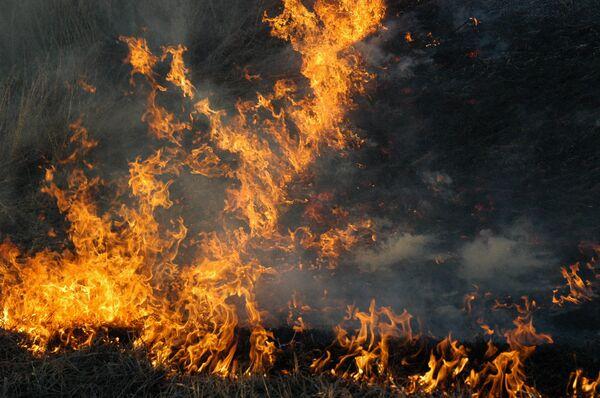 Wildfires more rampant in Russia in 2011, spread over east  - Sputnik International
