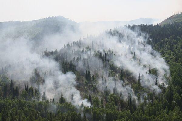 Wildfires. Archive - Sputnik International