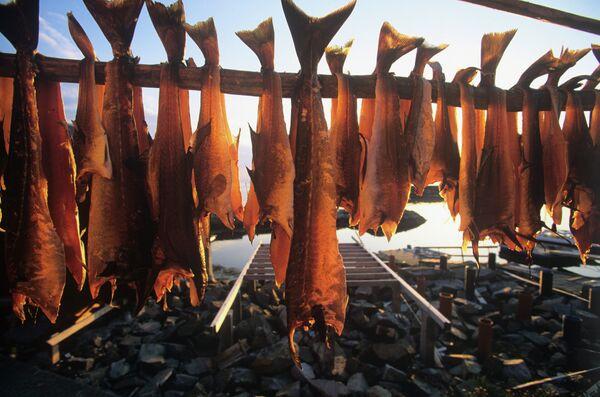 Russia Partially Bans Norwegian Fish - Sputnik International