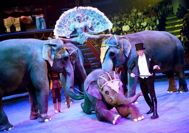 Празднование 95-летия Российского государственного цирка
