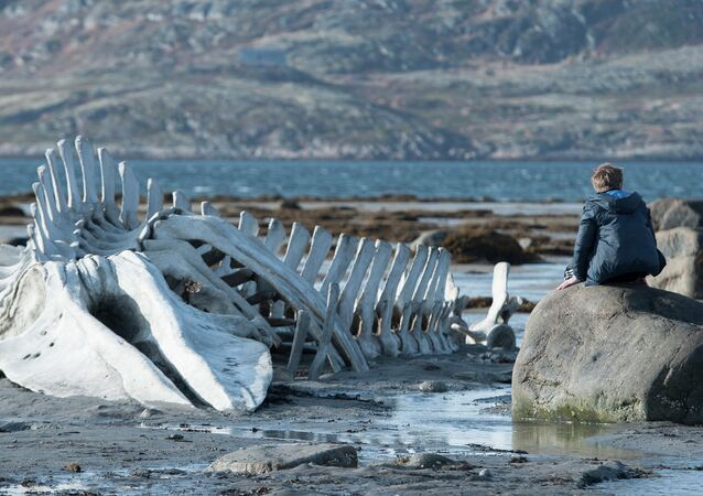 Russia's Golden Globe winner 'Leviathan' directed by Andrei Zvyagintsev was nominated Thursday for the best foreign language film Oscar.
